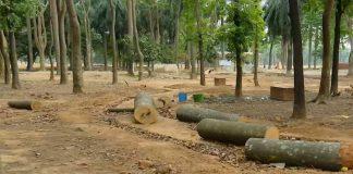 সোহরাওয়ার্দীতে গাছ কাটা বিষয়ে আদেশ আজ